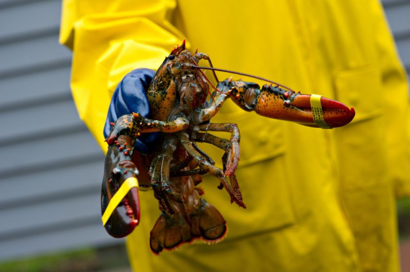 Maine lobster fishing