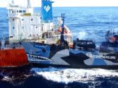 Outflanked Sea Shepherd Calls Off Southern Ocean Anti-Whaling Missions